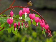 Hearts by Wilma1962* on Flickr.