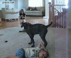 Perro sienta sobre niño | Funny Gif's - Page 439 - Tacoma World Forums