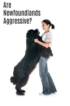 Are Newfoundlands Aggressive?Newfoundlands are not known as an aggressive dog breed. They are more known for their sweet and calm disposition. They are very loyal to their families and are happiest when they are by their side.  - My Brown Newfies Aggressive Dog Breeds, Dogs With Jobs, Nanny Dog, Purebred Dogs, Working Dogs, Big Dogs, Dog Care, Dog Toys, Your Dog