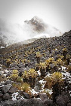 Colombia - el Cocuy | Photo: Patagonian Dreams