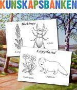 Här kan du ladda hem och ta reda på vilka blommor och djur som representerar vilket av våra respektive landskap i Sverige. Självklart färglägger du dem själv!
