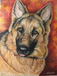 Pencil Portrait Mastery - Colored Pencil Portrait of German Shepherd - Hans - Discover The Secrets Of Drawing Realistic Pencil Portraits