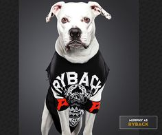 """Ty Foster, an extremely talented photographer working out of New York and Connecticut, recently shot a series of portraits for WWE (yes, as in World Wrestling Entertainment). These aren't just any portraits, though. No, these are the dogs of WWE Universe members dressed like the notorious Superstars of WWE: Ryback, Undertaker, Dwayne """"The Rock"""" Johnson… you get the picture!"""