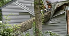 Severe Weather Destroys Trees in Poor Health Resulting in Catastrophic Losses. Discover How To Detect and Correct Problems and Keep Your Trees Healthy #tree #weather #tips