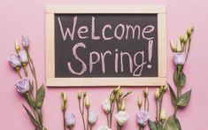 Download wallpapers Welcome Spring, pink flowers, wooden board, eustoma, spring flowers, spring concepts
