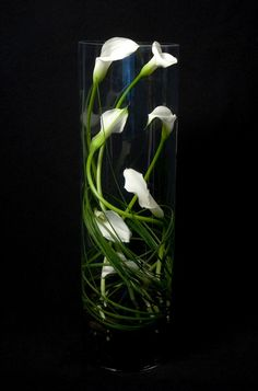 This is a floral arrangement that features miniature white calla lilies swirled inside a tall cylinder vase. See our entire selection at www.starflor.com.  To purchase any of our floral selections, as gifts or décor, please call us at 800.520.8999 or visit our e-commerce portal at www.Starbrightnyc.com. This composition of flowers is generally available for same day delivery in New York City (NYC).  V239