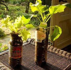 Neat! DIY container gardening in plastic bottles...