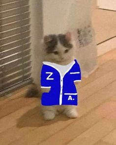 Cat Dresses, Small Cat, Zayn Malik, Awkward, Funny Cats, Core, Kitty, Cool Stuff, My Favorite Things