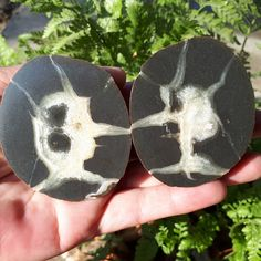 Items similar to Russian Septarian 2 Halves Septarian Stone, Gray Rock, Calcite Crystal, Natural Shapes, Displaying Collections, Fossils, Mother Earth, Plexus Products, Healing Stones