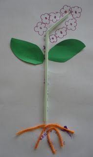3D plant model - I would add a cupcake paper for the petals and glue real seeds in the center