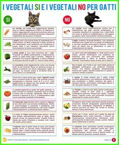 I vegetali SI e i vegetali NO per i gatti