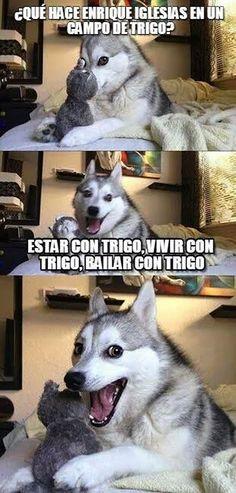 Enrique Iglesias en un campo de trigo. #humor #risa #graciosas #chistosas #divertidas