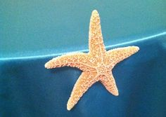 starfish table