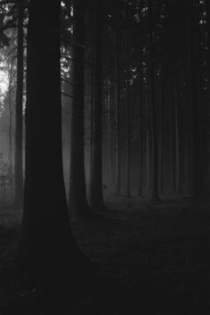 Find images and videos about black, black and white and nature on We Heart It - the app to get lost in what you love. B&w Tumblr, Dark Landscape, Dark Forest, Forest Path, Dark Photography, Dark Places, Light And Shadow, Dark Wood, Dark Art