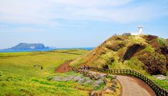 Jeju : Seopjikoji Hill - visited it on 24 March, So beautiful. Travel Reviews, Travel Deals, Isla Jeju, Korea Tourism, Travel Tourism, Jeju Island, Travel Magazines, The Real World, Day Tours