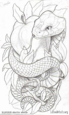 Like the symbolism. Lots of snake and apple tattoos have an angry looking snake. for men ✌ Like the symbolism. Lots of snake and apple tattoos have an angry looking snake. for men ✌ Tattoo Sketches, Tattoo Drawings, Art Sketches, Art Drawings, Drawings Of Snakes, Snake Drawing, Snake Art, Neck Drawing, Snake Sketch