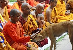 A Buddhist monk pats a dog, as others offer prayers at Mahabodhi temple in Bodhgaya.