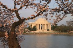 Jefferson Memorial in the evening with the Cherry Blossoms