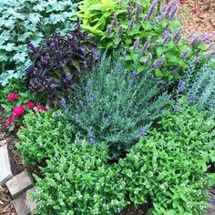 Globe Basil, Spicy Globe Basil, Herb Garden Seeds, Great for Container Gardens and Small Space Garde Herb Garden Design, Garden Tools, Garden Seeds, Garden Plants, Water Garden, Gemüseanbau In Kübeln, Small Herb Gardens, Types Of Herbs, Olive Garden