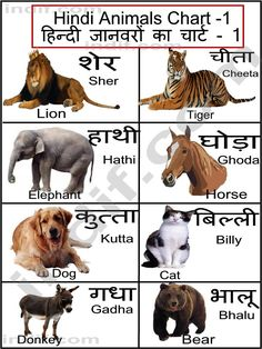 Hindi terms for a few common animals शब्दावली Hindi beautiful house names in sanskrit - House Beautiful Hindi Language Learning, Hindi Alphabet, Sanskrit Language, Hindi Worksheets, Learn Hindi, Indian Hindi, Hindi Words, Kindergarten Themes, English Writing Skills