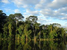 Very impressive rainforest scenes await you in this photo gallery. When I saw these landscapes, only one thing comes to my mind. We need to protect nature. Rio Grande Do Norte, Maya, The Last Remnant, Forest Habitat, Mangrove Forest, Rare Plants, Tier Fotos, Environmental Issues, Nature Scenes