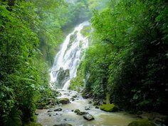 panama rainforest pictures