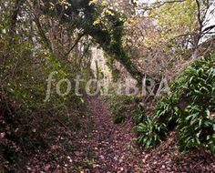 Sunken lane, Chicksgrove, Wiltshire (WILTSHIRE - in the Nadder Valley : this ancient