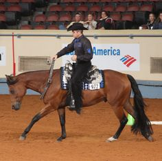 6e60d3410113 Harley D Zip  lt 3 The most winning-est horse in AQHA history.