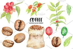 Watercolor Coffee Beans Clipart by Corner Croft on @creativemarket