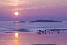 Cavaliers au coucher de soleil sur la plage de Kerhillio à Erdeven. En arrière plan, on distingue l'îlot du Roëlan. Bretagne.