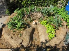 I call it my Top Ramen garden, says gardener, Root Simple neighbor and artist Anne Hars, I planted things that go well in Top Ramen. Hars is referring to her keyhole vegetable bed that she created this winter.