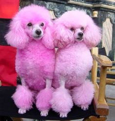 Pink puppies!