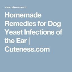 Homemade Dog Food For Ear Infections