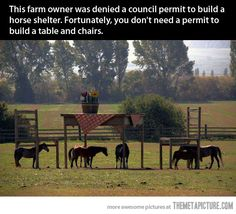 For all of us who think that there are too many rules!or would just like a chuckle. Farmer denied permit to build a horse shelter. So he builds giant table & chairs which doesn't need a permit. Funny Animal Pictures, Funny Animals, Funny Photos, Funny Images, Pet Photos, Horse Pictures, Bing Images, Horse Shelter, Animal Shelter