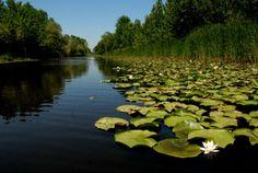 Acarlar Gölü Longozu : Sakarya Orman ve Su İşleri Şube Müdürlüğü
