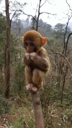 I'm going through a heartbreak, so have some aww gifs on - Affen/Monkeys/Singes/Monos Animal gif - Animals Wild Happy Animals, Nature Animals, Cute Funny Animals, Cute Baby Animals, Animals And Pets, Cute Dogs, Cute Babies, Cute Baby Sloths, Tier Wallpaper