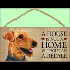 #Airedale