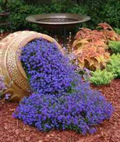 pot is planted on its side with flowers also planted on the ground. Flowers used is Loebellia.