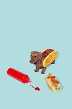 art direction | hot dog | Henry Busby