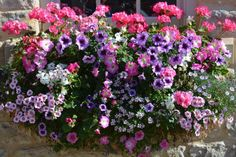 A well-designed window box can be the crowning glory of your full sun garden.: Take the Garden to New Heights