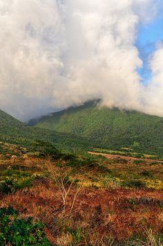 Savane de Liamuiga Saint Kitts http://search.pricebuster-travel.com/Country/Saint_Kitts_And_Nevis.htm