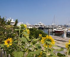 Sag Harbor, NY: Flowers bloom along the promenade on Long Wharf in this charming maritime village. Photo by Brown Harris Stevens of the Hamptons.