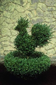 topiary chicken