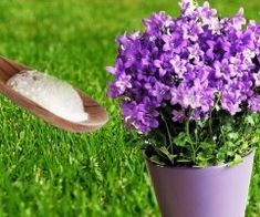Dental, House, Oral Health, Plants, Compost, Sodium Bicarbonate, Tulips, Grow Taller, Agriculture