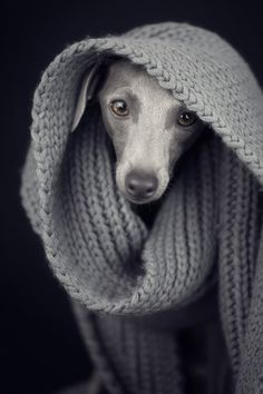 A collection of 25 aww-inducing portraits of dogs, cats, puppies, and kittens... need we say more? Didn't think so.