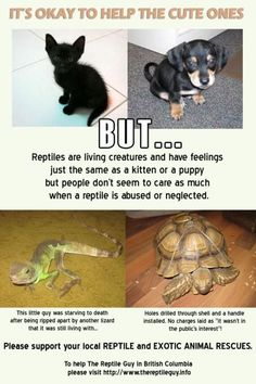 Save them...save the turtles!!!...and other animals too :)