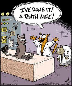 Halloween Funnies - Cat humor