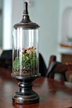 Cute terrarium, bring the outdoors in!