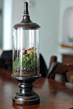 Cute terrarium, bring the outdoors in!