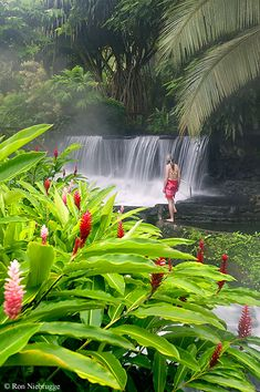 Tabacon Hot Springs Resort, Costa Rica. ASPEN CREEK TRAVEL - karen@aspencreektravel.com